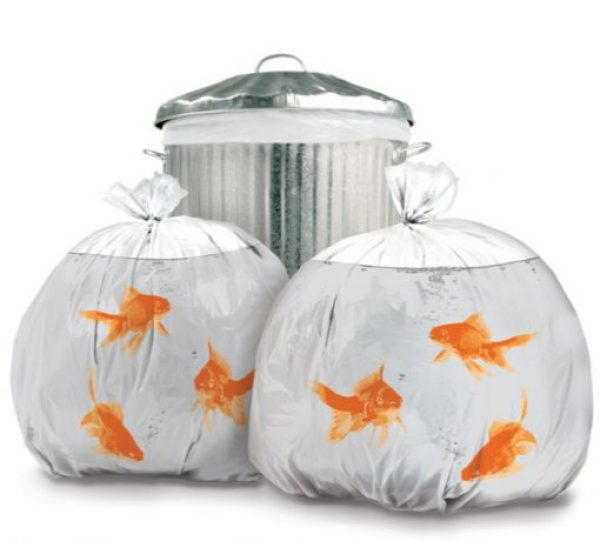 Goldfish Novelty Bin Bags
