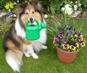 Top 10 Green Pawed Dogs Doing a Spot of Gardening