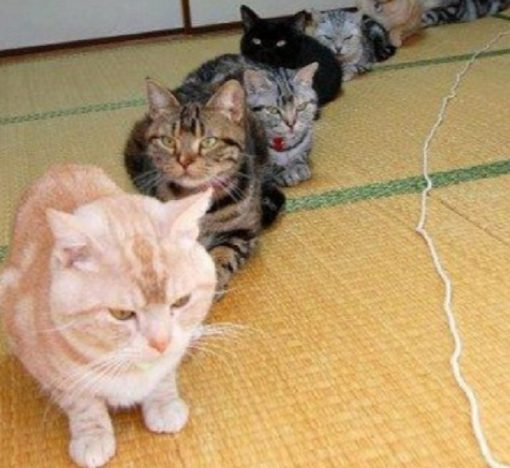 Top 10 Very Patient Cats Waiting in Queues