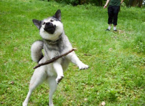 Dog Rubbish at Fetch