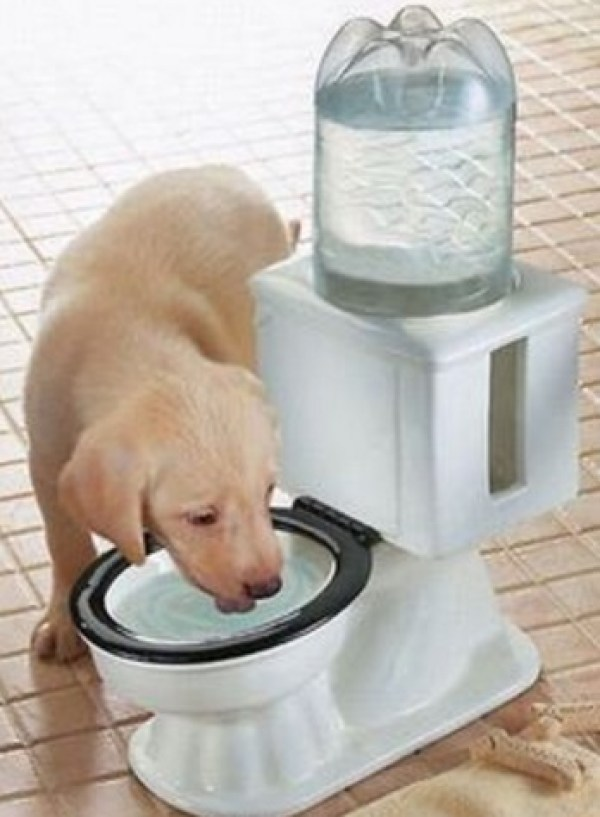 Make sure your dog stays hydrated