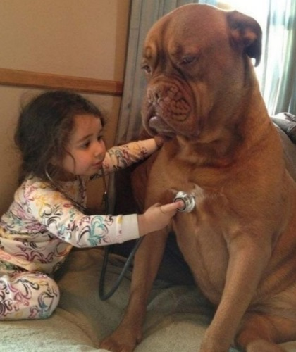 Top 10 ways to keep your dog healthy