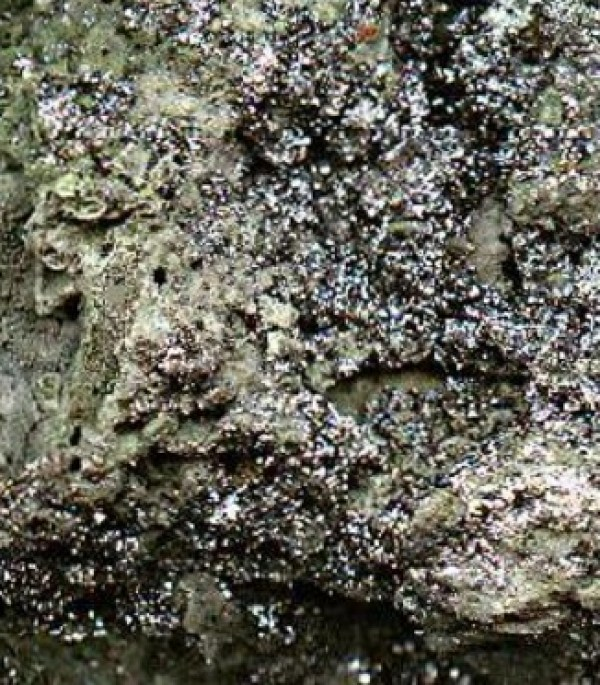 Rhenium