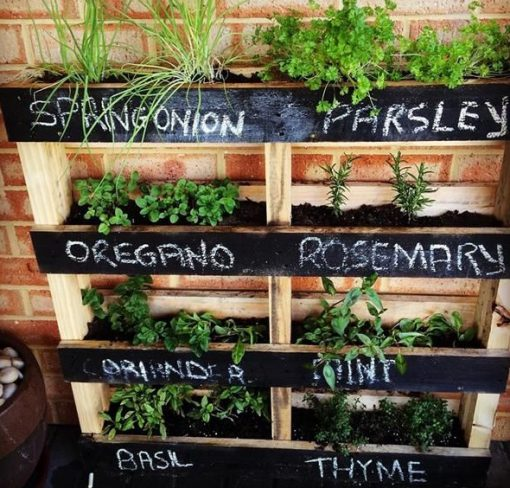 Old Wooden Pallet Transformed Into a Vertical Herb Garden