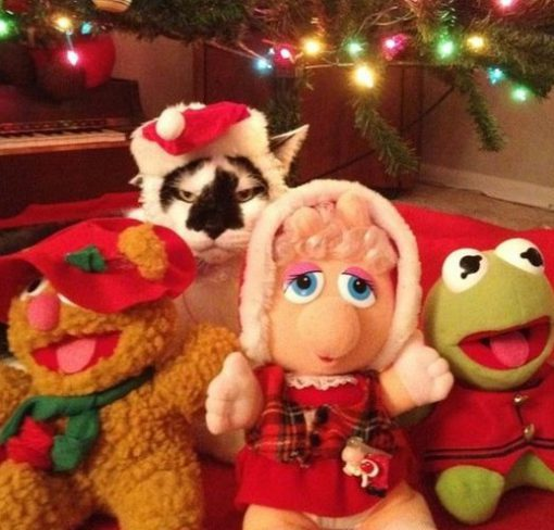 Cat With Muppet Toys
