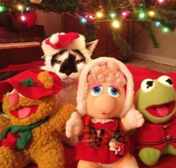 Top 10 Muppet Cats and Cats Who Are Muppet Fans