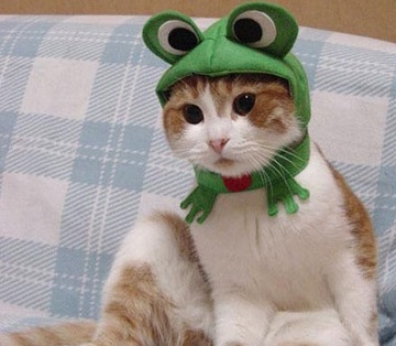 Cat Dressed as a Muppet