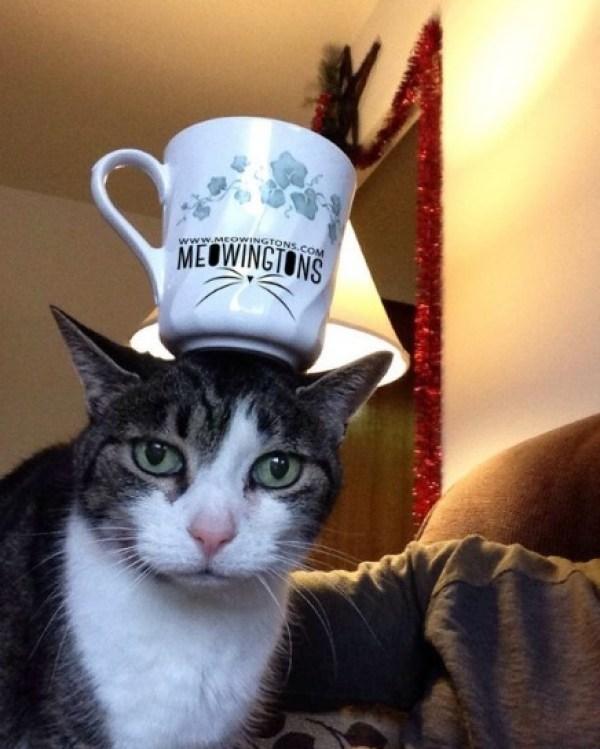 Cat Balancing a Mug on Its Head