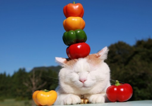 Cat Balancing 3 Peppers on Its Head