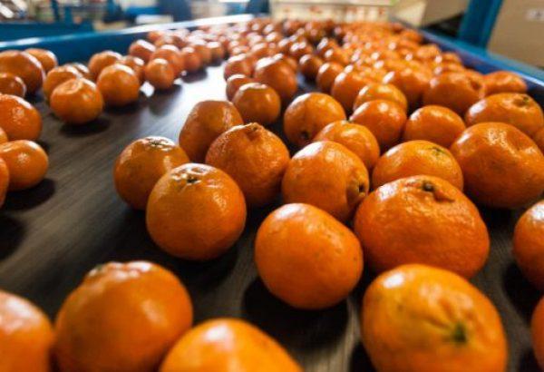 South Africa Orange Production