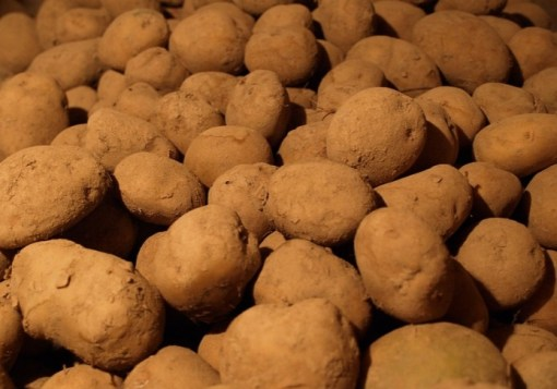 Netherlands Potatoes