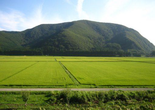 Japan Rice Production