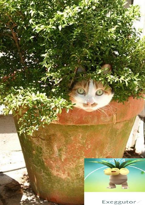 Cat Looks Like an Exeggutor