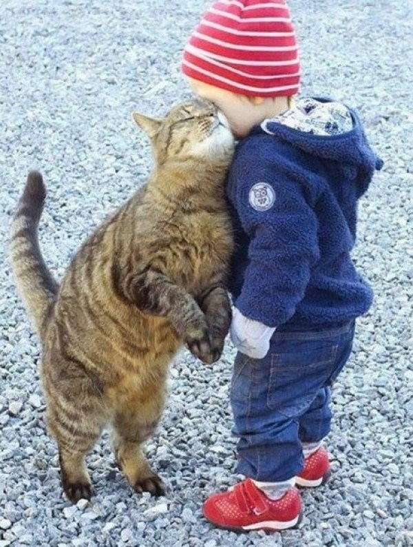 Cat Rubbing on a Child