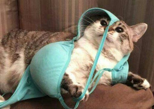 Cat Tangled Up in a Bra