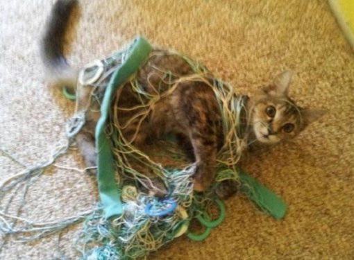 Cat Tangled Up in Wool