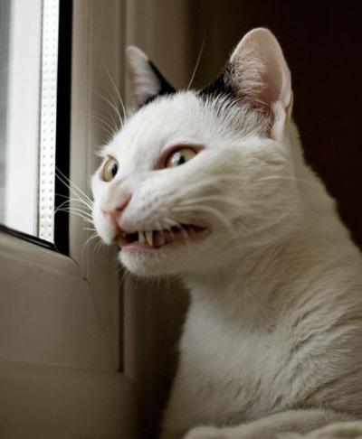 Cat That Has Just Broken Wind