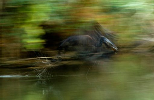 The Top 10 Fastest Animals in the World