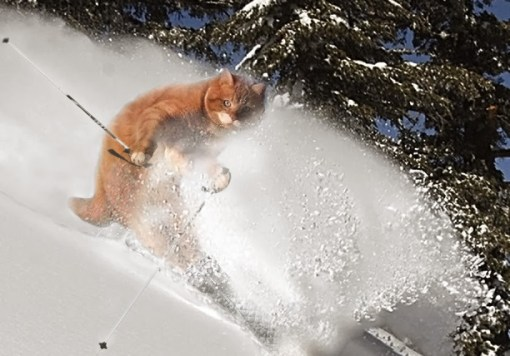Skiing Cat