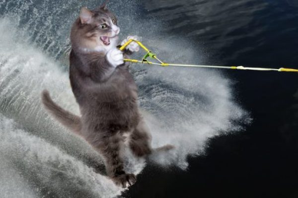 Water Skiing Cat