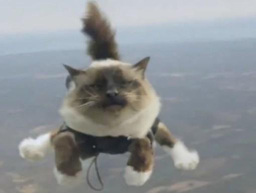 Sky Diving Cat
