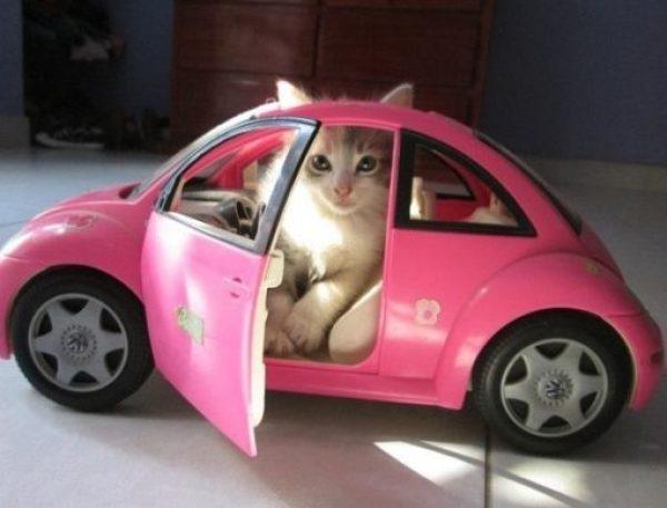Volkswagen Cat Costume