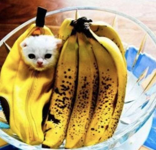 Chiquita Banana Cat Costume & Top 10 Corporate Loving Brand Name Cat Costumes