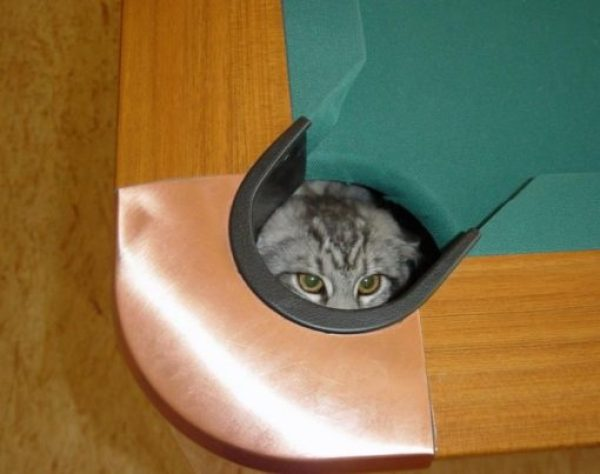 Cat Hiding in Snooker Table