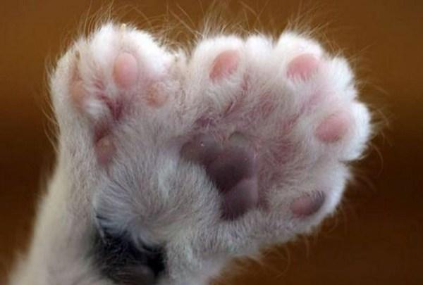 Adagio the Cat