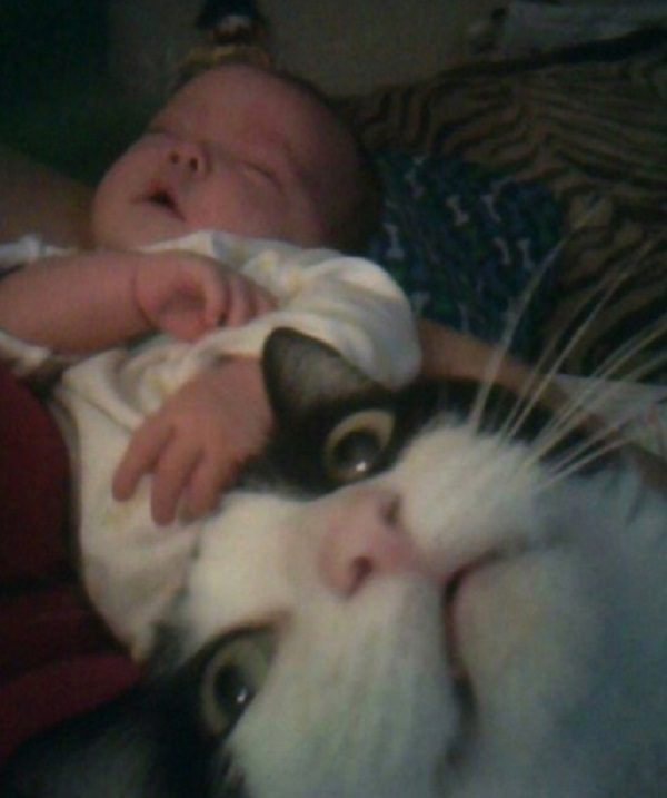 Top 10 Cats Ruining Perfectly Good Photos