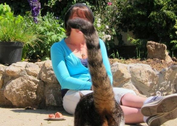 Top 10 Cats Ruining Perfectly Good Photos