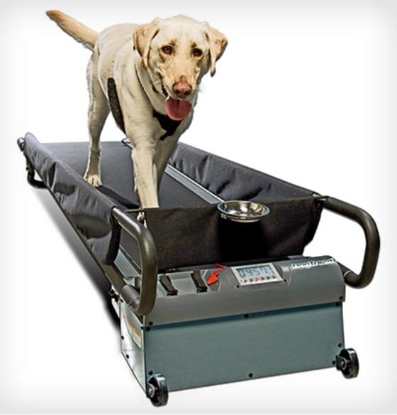 PetZen Dog Treadmill