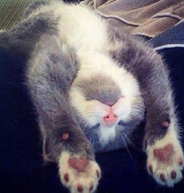 Cat Sleeping in Strange and Uncomfortable Position