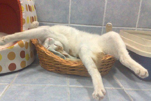 Ten Cats Sleeping in Strange and Uncomfortable Positions