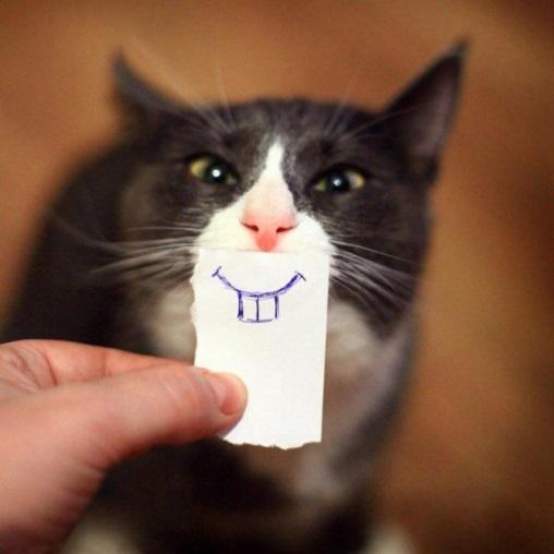Hamster Cat