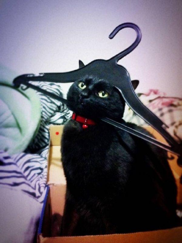 Cat Caught in a Coat Hanger