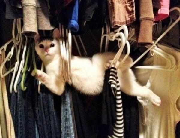 Cat Trying to Sleep in Coat Hangers