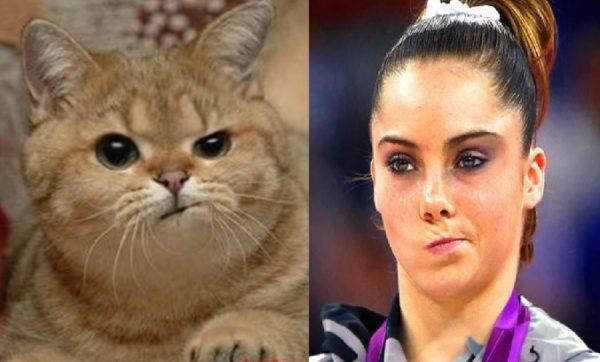 Ten Cats That Looks Like Popular Memes