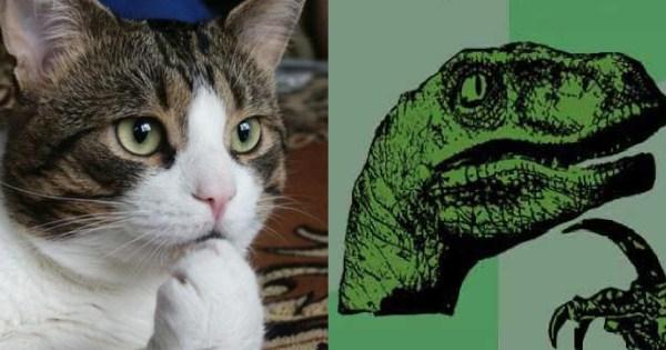 Thinking Raptor