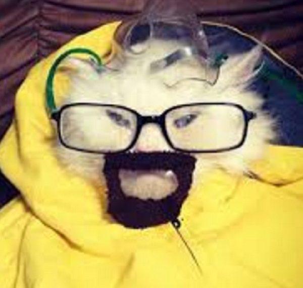 Cat With Fake Beard