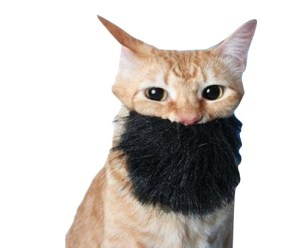 Ten Cats With Beards Who Are More Than a Man Than Most Men
