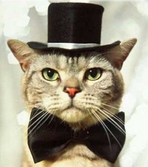 Cat Wearing a Top Hat