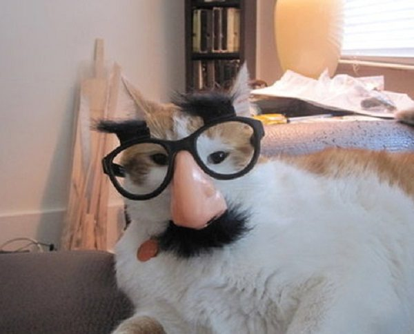 Ten Cats Wearing Crazy Glasses Just to Make You Laugh