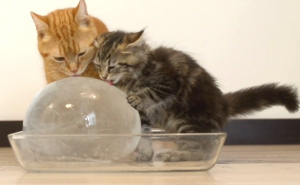 Cats Staying Cool With Some Ice