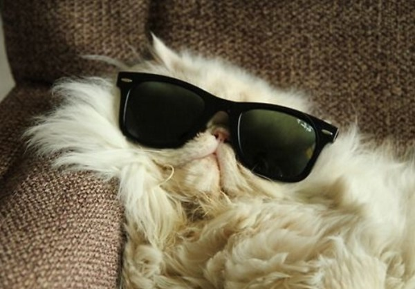 Top 10 Ways To Cool Down Your Cat This Summer