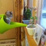 Ten Cats Who Are Just Getting the Way (Because They Can)