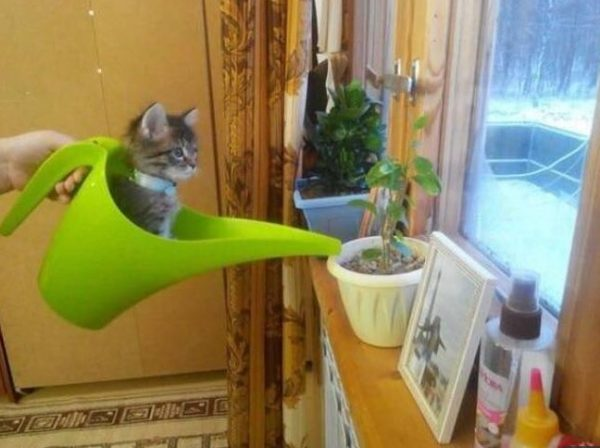 Cat Getting in the Way of Watering the Plants