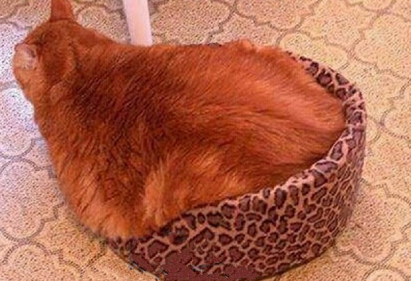 Sign Your Cat Is Putting on Some Extra Weight