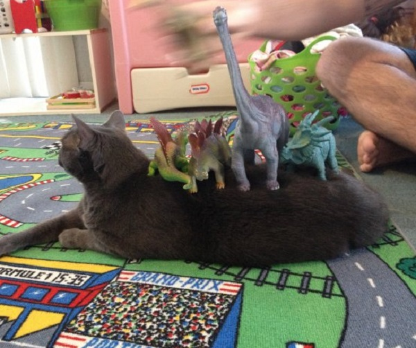 Cat Covered in Toy Dinosaurs