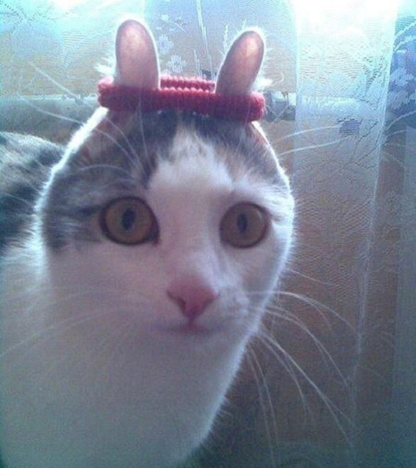 Cat With Funny Ears